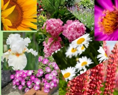 Landscaping in St. Catharines - Landscaping St. Catharines - Colourful Flowers for Your Landscaping Project